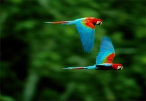 Madidi es un paraíso para los ornitólogos.